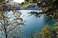 Alpsee - panoramio (3).jpg