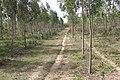 Alto Araguaia - State of Mato Grosso, Brazil - panoramio (1201).jpg