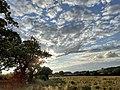 Altocumulus fields.jpg