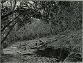Am Tendaguru - Leben und Wirken einer deutschen Forschungsexpedition zur Ausgrabung vorweltlicher Riesensaurier in Deutsch-Ostafrika (1912) (18166364781).jpg