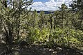 American Mesa - Flickr - aspidoscelis (1).jpg