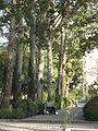 Amin al-Islami Park - Trees and Flowers - Nishapur 036.JPG