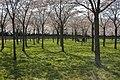 Amsterdamse Bos 04-2013 - panoramio (5).jpg