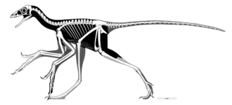 Anchiornithidae - Skeletal restoration of Anchiornis huxleyi by Scott Hartman, 2017
