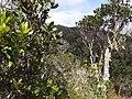 Andasibe-Mantadia National Park 2013 24.jpg
