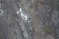 Andean Condor 2015-06-03 (2) (26437794078).jpg