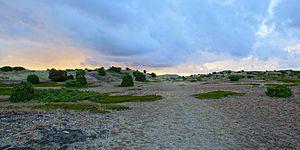 Anholt (Denmark) - Anholt, Ørkenen - Desert - with sparse vegetation, covers 80 percent of the island.