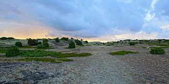Anholt (Denmark) - Anholt, Ørkenen - Desert - with sparse vegetation, covers 80 percent of the island.