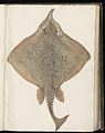 Animal drawings collected by Felix Platter, p1 - (140).jpg