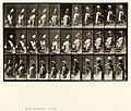 Animal locomotion. Plate 148 (Boston Public Library).jpg