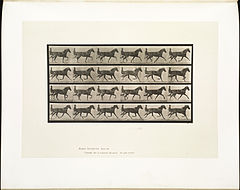 Animal locomotion. Plate 608 (Boston Public Library).jpg