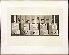 Animal locomotion. Plate 764 (Boston Public Library).jpg