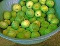 Apple gourd.jpg