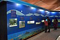 Aquarium Corner - Life Science Gallery - Digha Science Centre - New Digha - East Midnapore 2015-05-03 9968.JPG