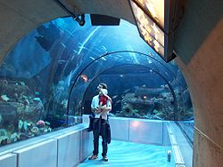 Aquarium du Quebec - 2006-06 - grand ocean.JPG