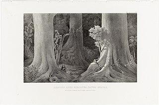 Arbores Ante Christum Natum Enatae, in silva juxta fluvium Amazonum