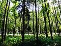 Arkhangelskoye, Moskovskaya oblast', Russia - panoramio (71).jpg