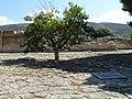 Armon Knossos P1050993.JPG