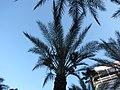 Around Las Vegas, Nevada (450252) (9463206791).jpg