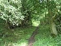 Ascent through the Woods. - geograph.org.uk - 468970.jpg