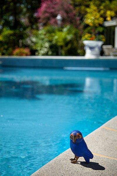 File au bord de la piscine du relais ch teaux parc for Bord de piscine