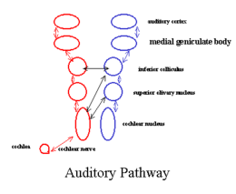Aud pathway.png