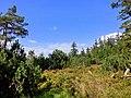 Auf der Königsheide 2 - panoramio.jpg