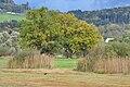 Auslikon 2010-10-20 17-24-38.JPG