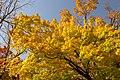 Autumn Leaves (125453947).jpeg