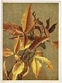 Autumn Leaves No. 3 Beech (Boston Public Library).jpg