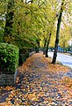 Autumn Leaves on Spencefield Lane - geograph.org.uk - 1008263.jpg