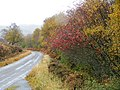 Autumn colours by Glen Loth road - geograph.org.uk - 1556368.jpg