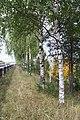 Autumn in Kirov. Russia. Осень в Кирове. Россия - panoramio (1).jpg
