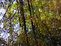 Autumn reflections - geograph.org.uk - 591611.jpg