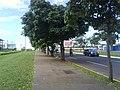 Av. Mato Grosso - panoramio (3).jpg