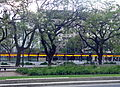 Avenida 9 de Julio metrobús árboles.JPG