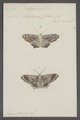 Azelina - Print - Iconographia Zoologica - Special Collections University of Amsterdam - UBAINV0274 059 03 0014.tif