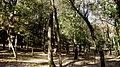 BOSC (BARRI MONTILIVI-PALAU) GIRONA - panoramio (1).jpg