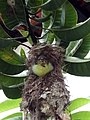 Baby bird in nest looking out.jpg