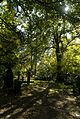 Baeume Stadtfriedhof-Goettingen.jpg