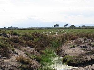 Bahia del Fangar.jpg