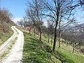 Balići - panoramio (11).jpg