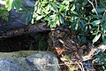 Bauchman Rocks - panoramio.jpg