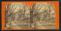 Beacon Street Mall--Boston Common, by H. Ropes & Co..png