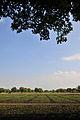 Beanfield (4460365316).jpg