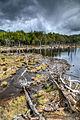 Beaver Dam - Tierra del Fuego National Park.jpg