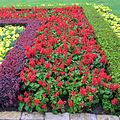 Berberis thunbergii as border in flowers bad.jpg