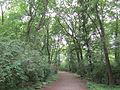 Berlin Bellevue forest pathway.jpg