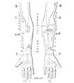 Bertillon - Identification anthropométrique (1893) 350 n&b.png