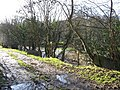 Beside The River Vyrnwy - geograph.org.uk - 315758.jpg